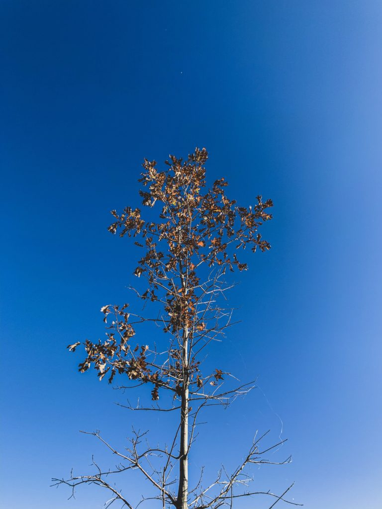 Tall Tree in Autumn weather