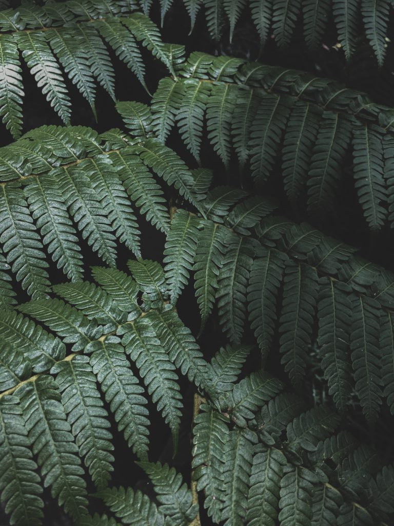Stacks of Fern fronds